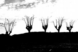 <strong>zwart wit 3</strong>